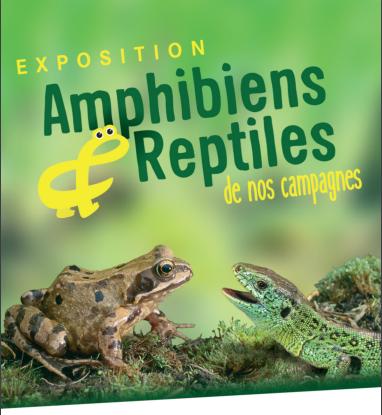 Amphibiens et reptiles de nos campagnes