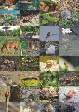 Biodiversité en-jeux