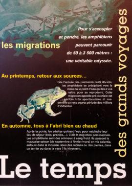 L'odyssée des amphibiens